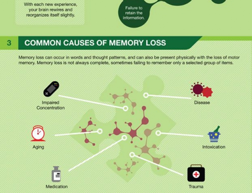 Infographic: How memory works
